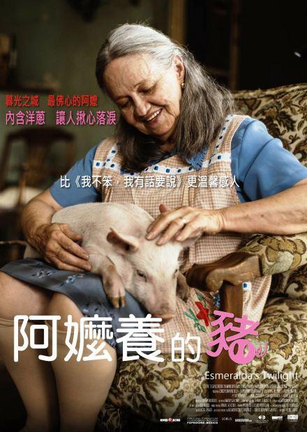 阿嬤養的豬