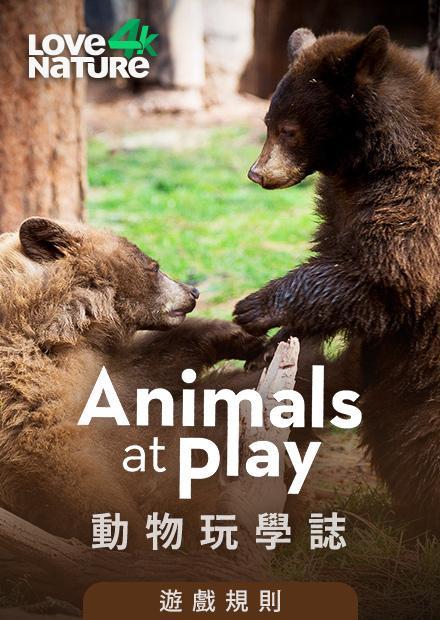 動物玩學誌第一季-遊戲規則