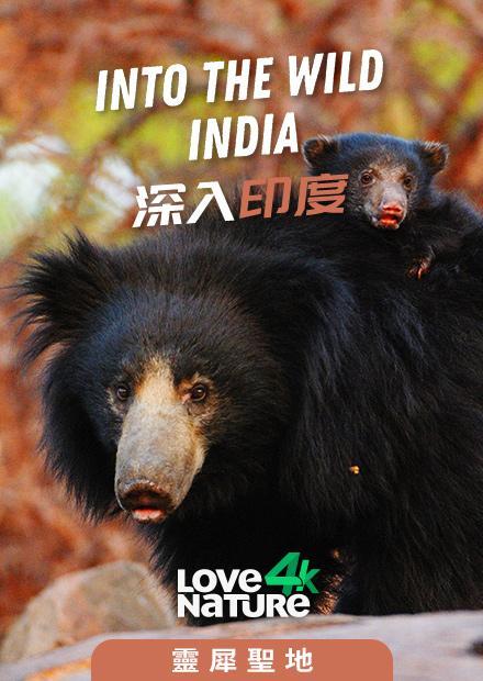 深入印度第一季-靈犀聖地