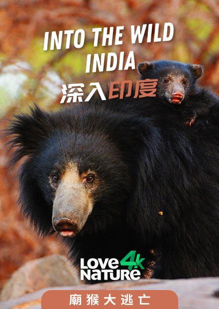 深入印度第一季-廟猴大逃亡