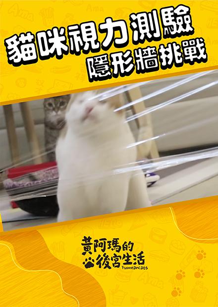 【黃阿瑪的後宮生活】貓視力測驗!隱形牆挑戰!