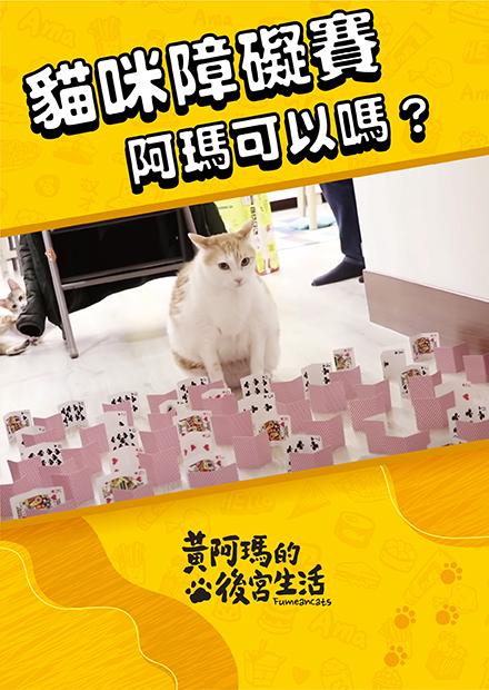 【黃阿瑪的後宮生活】貓咪障礙賽!阿瑪可以嗎?
