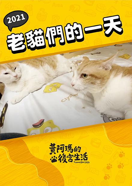 【黃阿瑪的後宮生活】2021老貓們的一天!