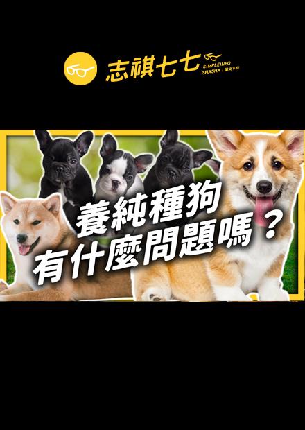 可愛的代價!純種狗是怎麼來的?人工繁殖為什麼讓狗滿身是病,越來越不適合生存?|志祺七七